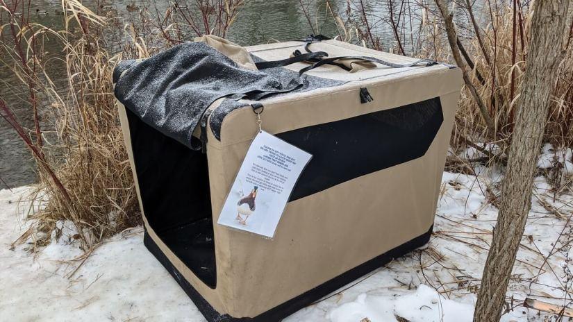 pet crate, eddie the mandarin duck, newmarket, ontario