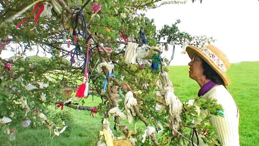 jean at the wishing tree of tara, county meath, ireland
