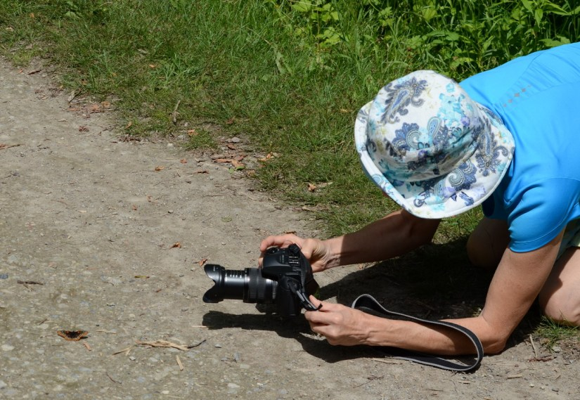 jean photographing a baltimore checkerspot butterfly, glendon forest trail, toronto, ontario