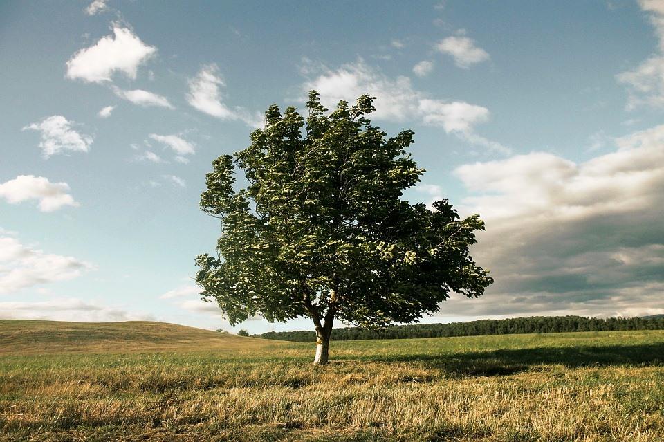 Guarda l'albero