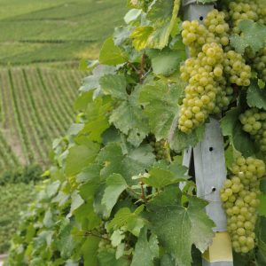 Complete Itinerary in the Region of Champagne