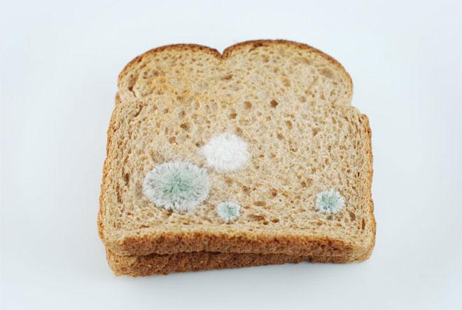 toast_moisi_klausner