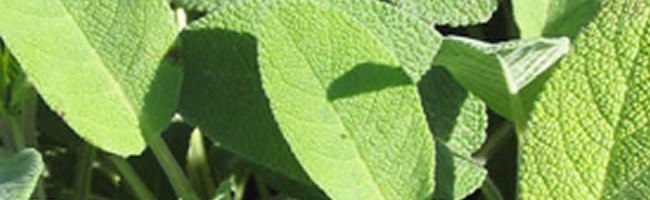 Cosa significa Naturopatia