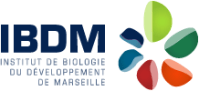 logo-ibdm