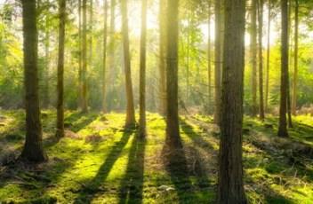 Let's Challenge – IoT natječaj za očuvanje šuma u Hrvatskoj
