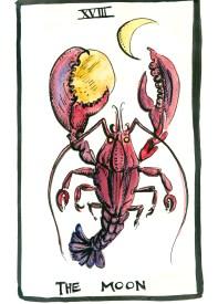 botanical illustration by franky frances cannon