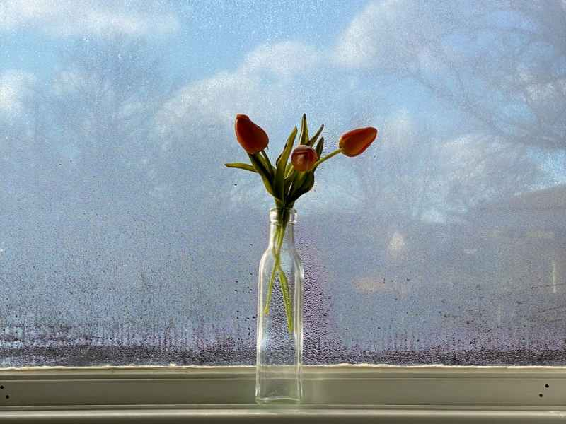 bunch of tulips in glass vase placed on windowsill