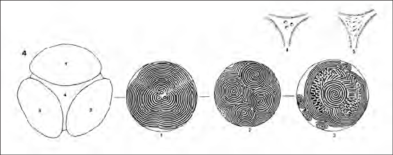 Fig-1-The-carved-stone-ball-from-Towie-Scotland-After-Marshall-1977