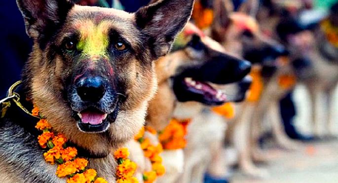 kukur-tihar-festival-que-rinde-homenaje-a-los-perros-como-debe-ser-portada2.jpg