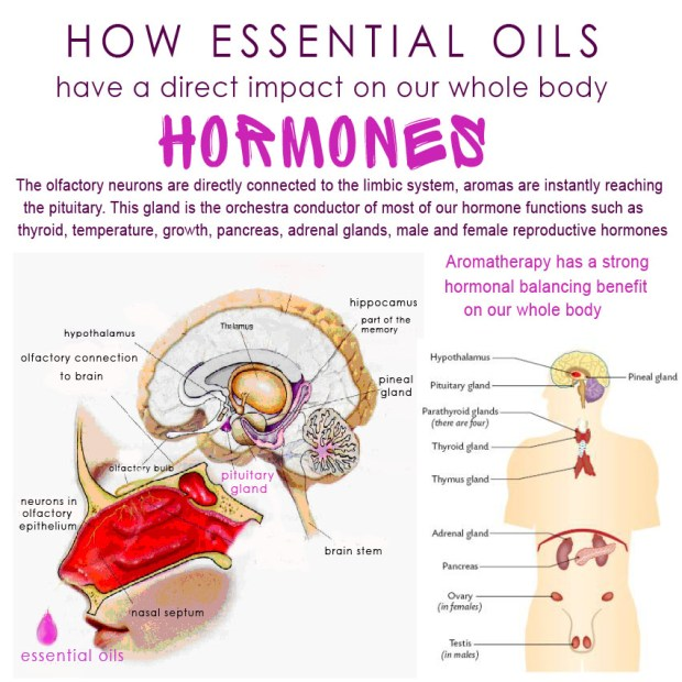 how essential oils impact hormons