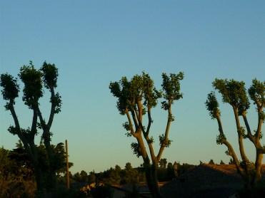 line of trees 3