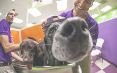 Pet store franchise press mentions wag n wash wag n wash newest location in dallas solutioingenieria Image collections