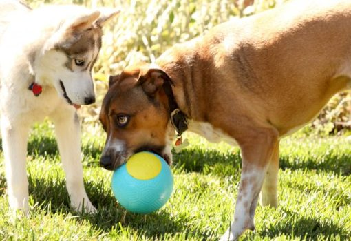 Dog Toys Can Make for Easy Add-On Sales