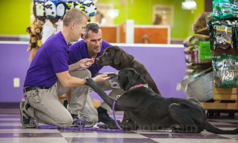Built Through Entrepreneurship, Wag N' Wash is a Dog Wash Franchise that Puts Dogs First