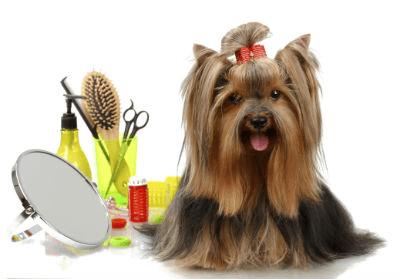 pet-grooming-business