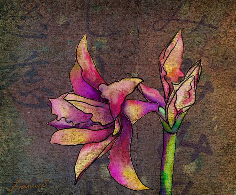 Oriental Amaryllis