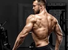 masa musculara definita
