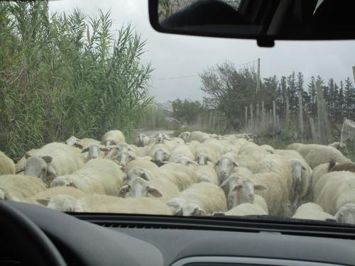 Pastoral Views, Sicily