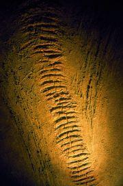 Francis-Gimgembre-Éléphant-023