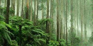 Australasian EPD - Francis Stevens Communications