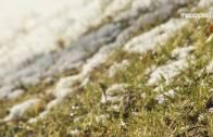 Franciszkańskim okiem 22 – Nagły powrót zimy