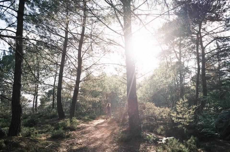Balade en forêt – Classic Neg