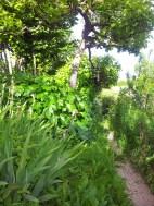 Questo giardino - 6