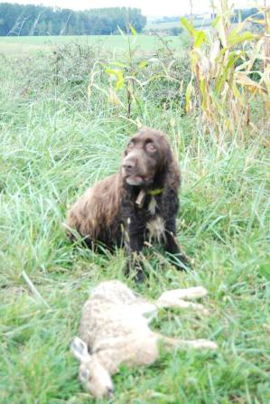 Dallie 7 ans chasse