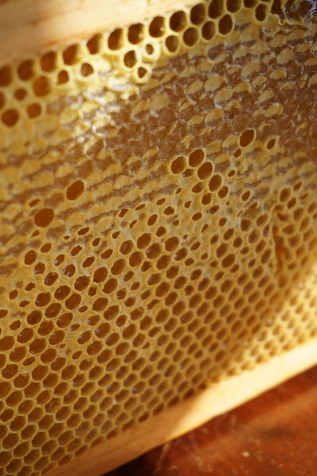 Honeycomb | Francois et Moi