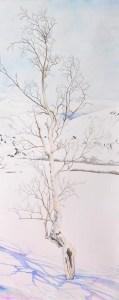 arbre lapon