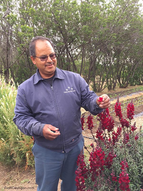 Master Gardener Salvatore and edible hibiscus for garnish