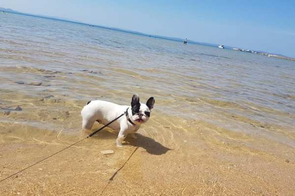 Stiglo je ljeto: Popis plaža na koje smijete sa psima
