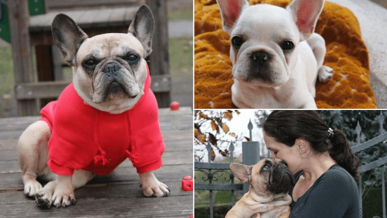 Znanstvenici su potvrdili: Vlasnici francuskih buldoga vole svoje pse više nego druge ljude