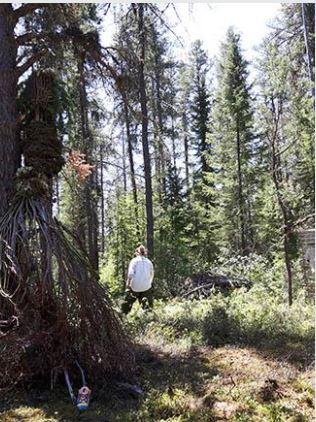 L'amoureuse de la Forêt