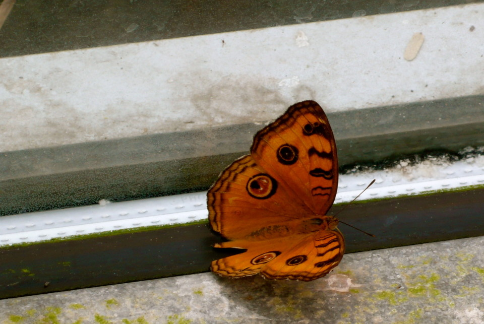 Look what I saw on the windowsill.
