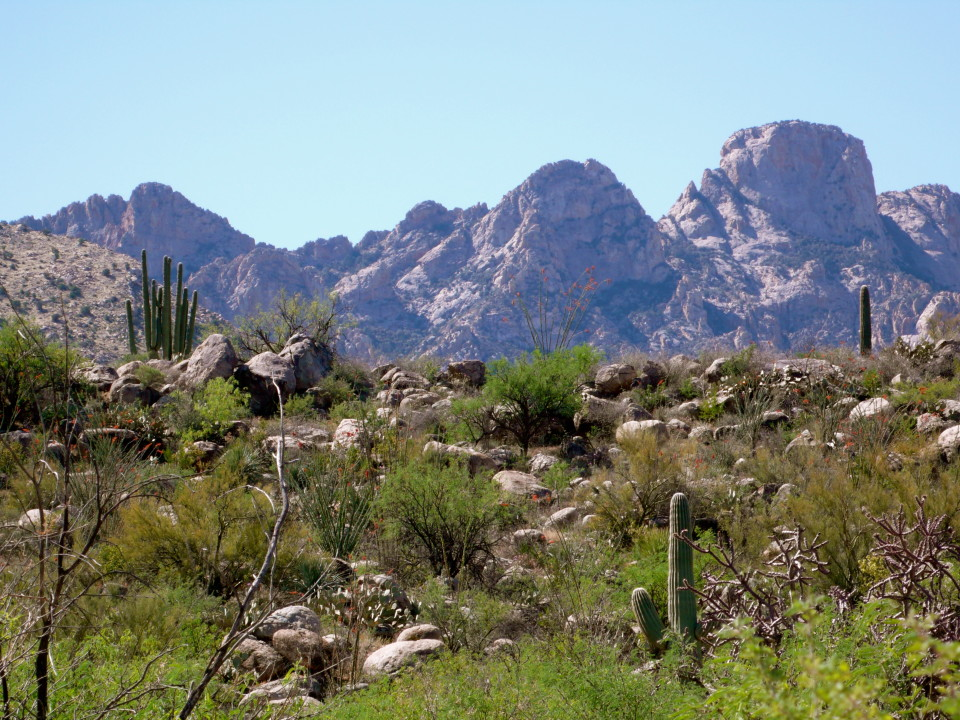 Romero Canyon Trail in Catalina State Park.  The Catalina Mountains grace the background of this photo.
