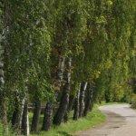 unstrut-radweg_ortseinfahrt_werningshausen