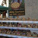 zwiebelmarkt_weimar_2018_alte_kartoffelsorten
