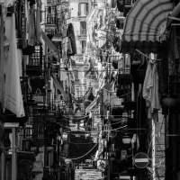 Napoli N° 1 - Lovisolo