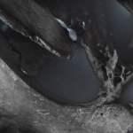 Photographie ossifère : Voyage en Crâne inconnu