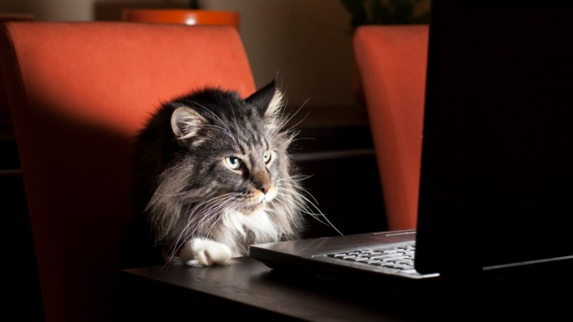 cat-at-work1