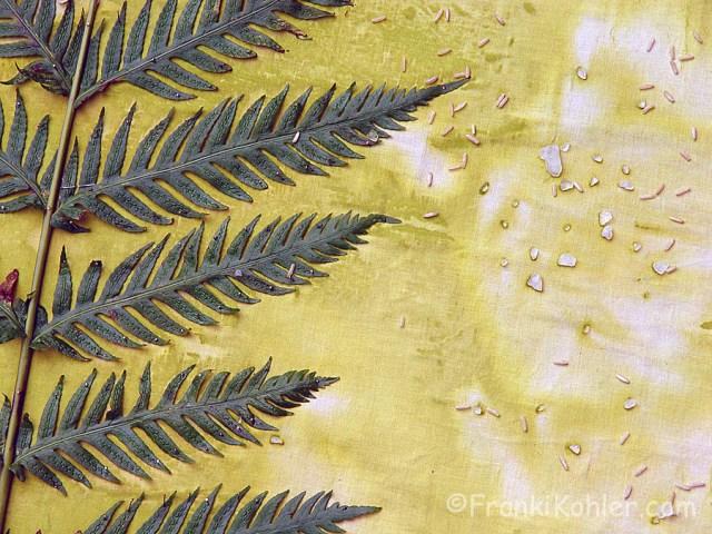 Franki Kohler, sun print detail