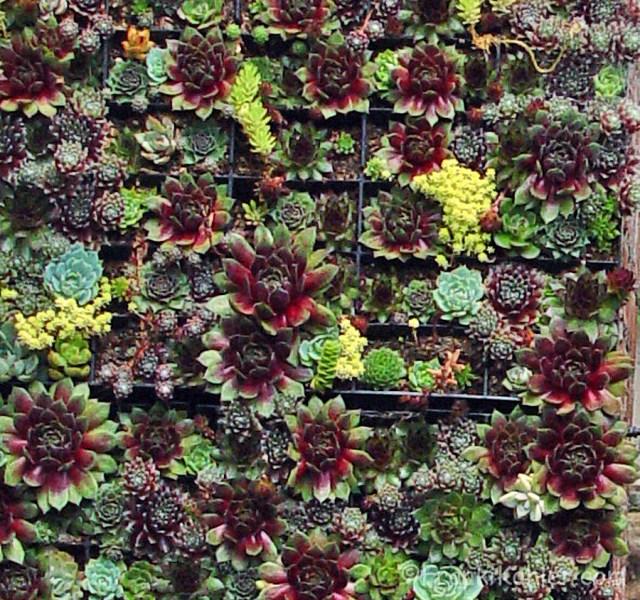 07-16-succulent-panel