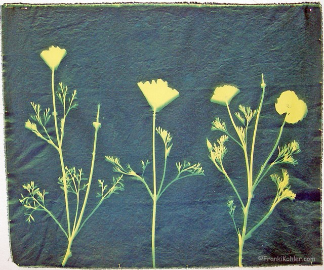 Franki Kohler, Experiment with cyanotype