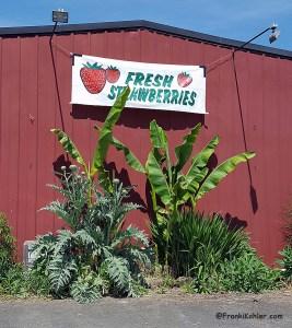 05-13-16 Suavie, Kruger Farm