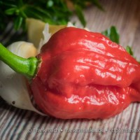 [:da]Carolina Reaper chilisauce[:en]Carolina Reaper Chili Sauce[:]