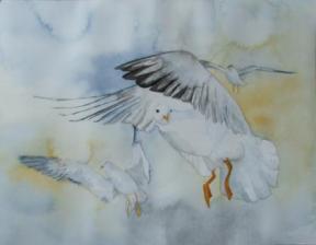Möwen im Flug (c) Aquarell von Frank Koebsch