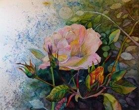 Blüten in der Herbstsonne (c) Rosen Aquarell von Frank Koebsch