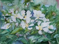 Frühlingsgruß (c) Aquarell mit Kirschblüten von Frank Koebsch