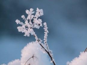 Der Frost verzaubert die Pflanzen (c) Frank Koebsch 1